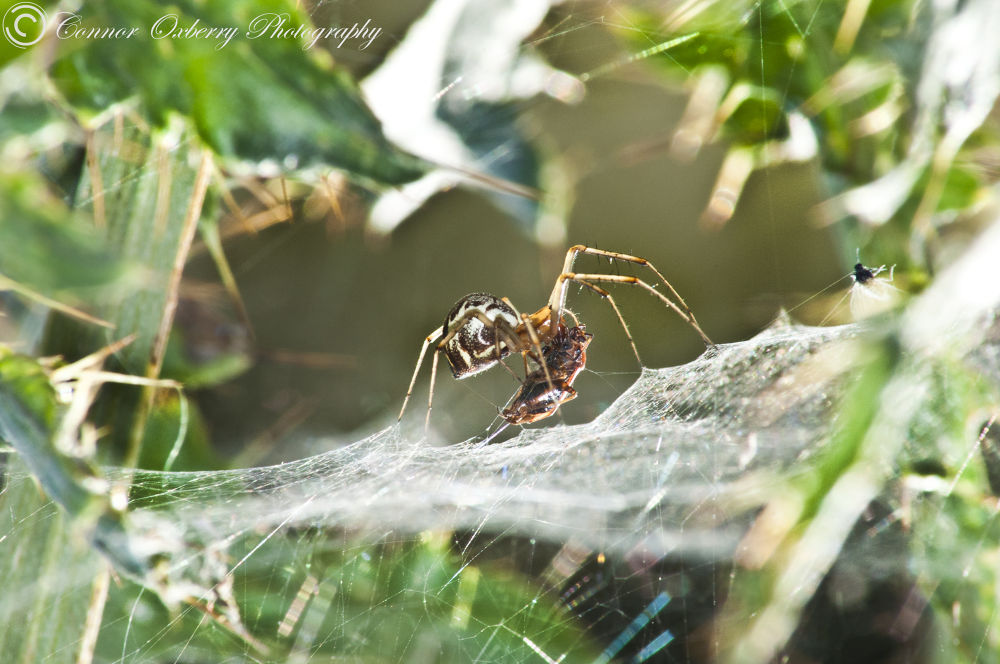 Spider by Connor Oxberry Photography