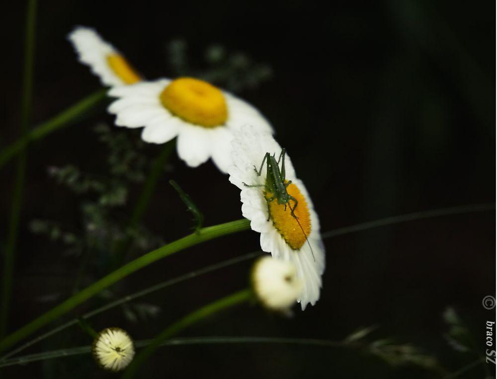 cvijet by Zdravko Sudac