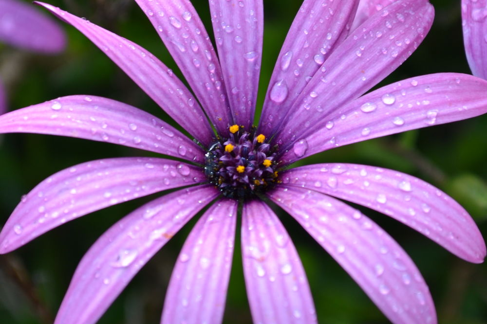 After rain comes, flowers look like this. by Corey Battersby Photography