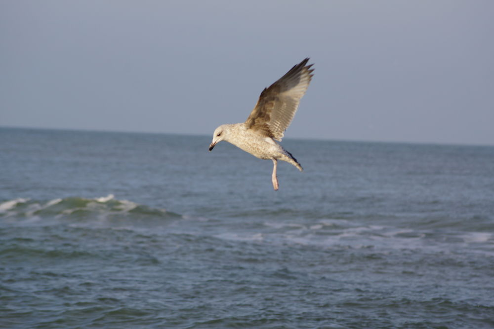 Landing... by Angelique Sanders