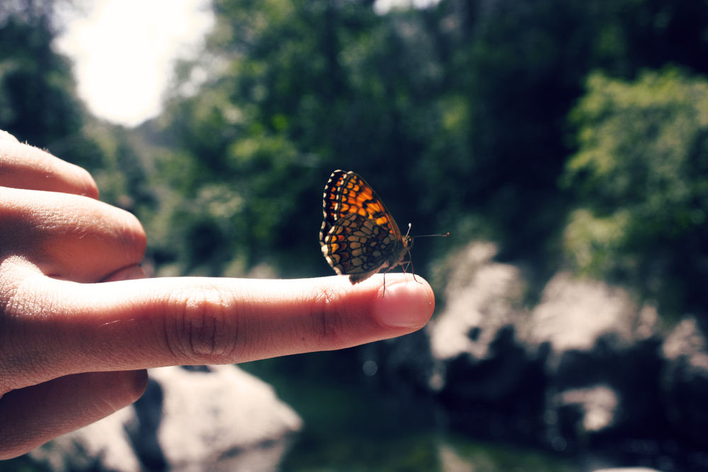 friendly butterfly by ruthtemporal