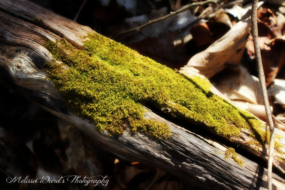 just a log..  by Melissa Ward