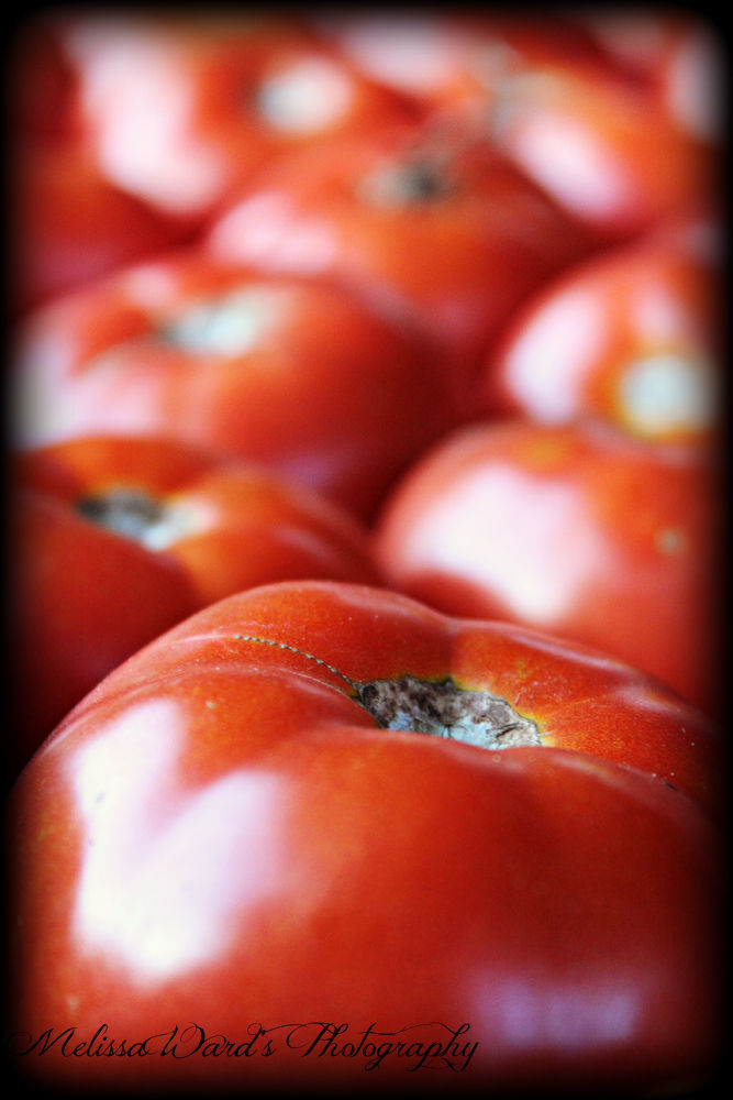 tomatoes by Melissa Ward