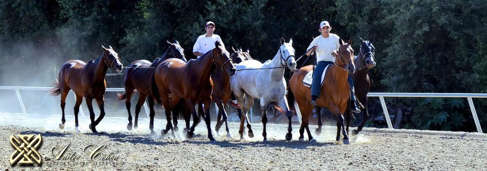 Santa Barbara Polo Club by Andre Cohen