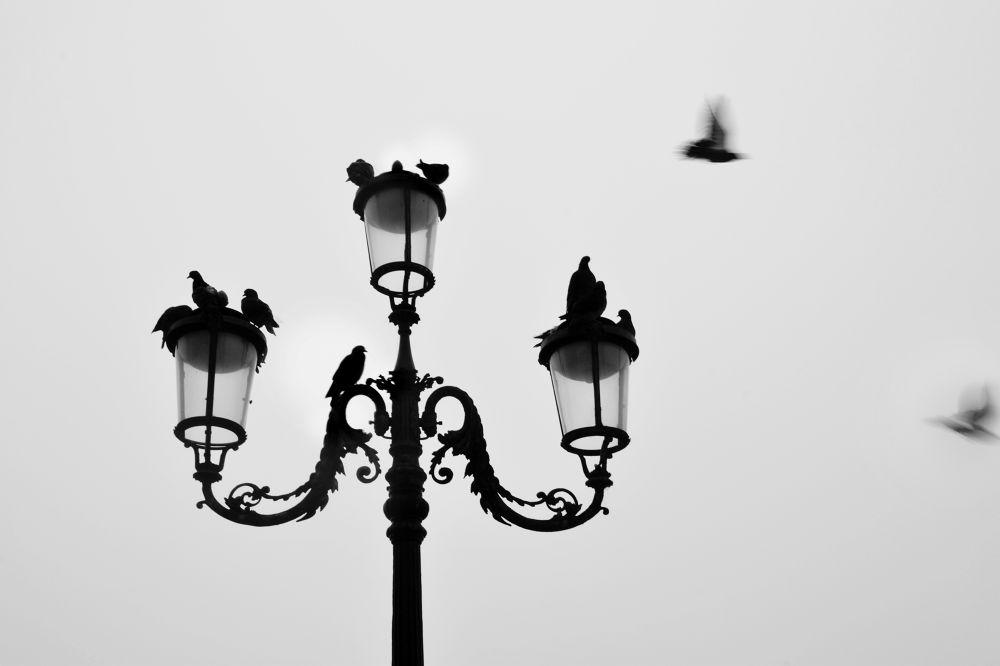 1 by Triznya Dóra