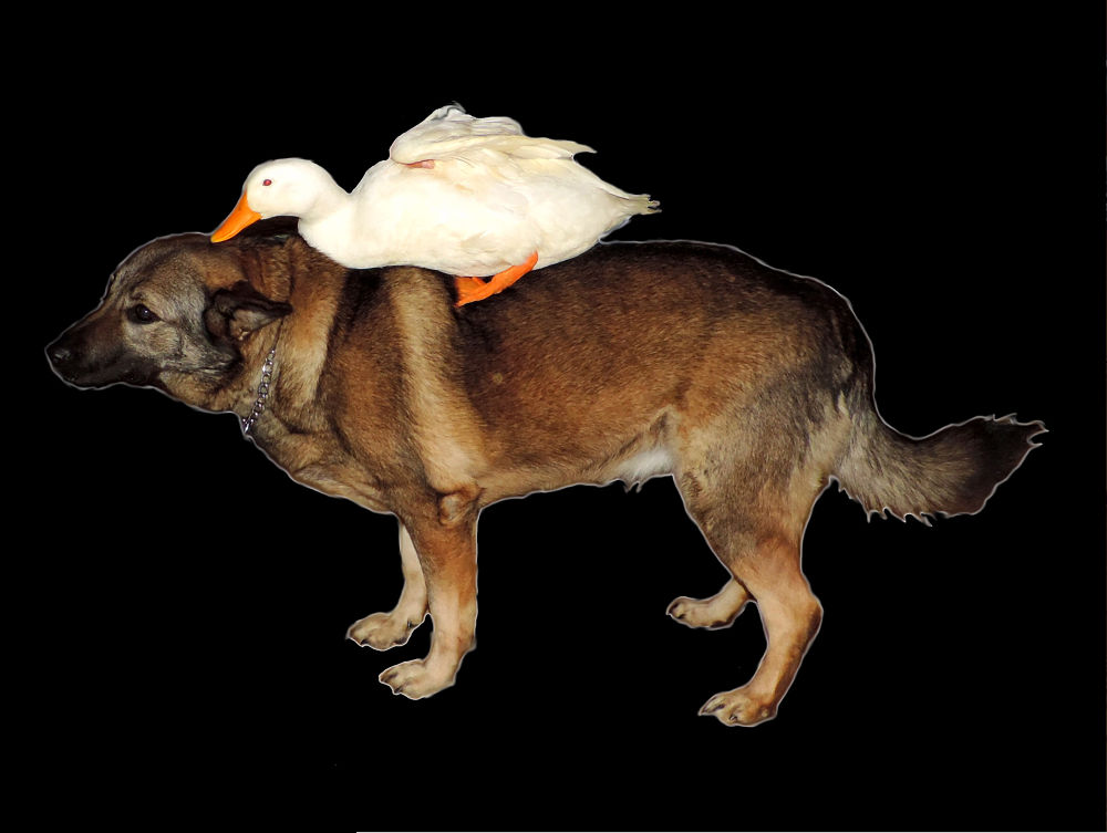bird dog 2 by Stephanie Kendall