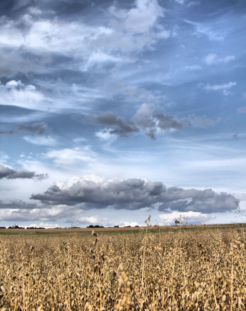 Feld HDR by MikesPhptography