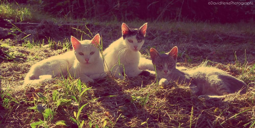 My cats by DavidHerkePhotographs