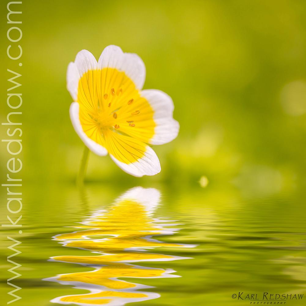 Photo in Macro #flower #macro #water #reflection