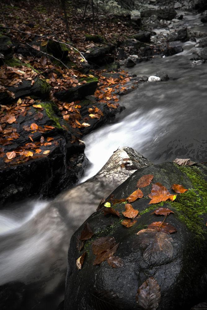 Photo in Nature #autumn