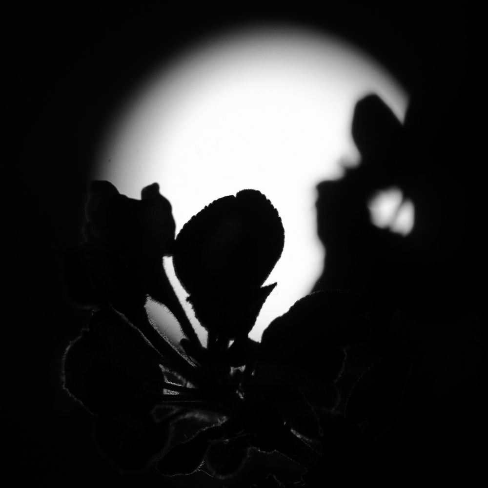 In Quiet Night... by PLICTY