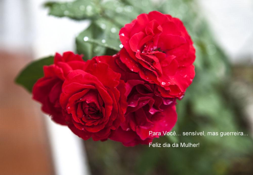 rosa by Irajah