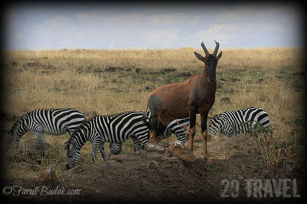 29 TRAVEL-2012-11-08-KENYA by farukbudak