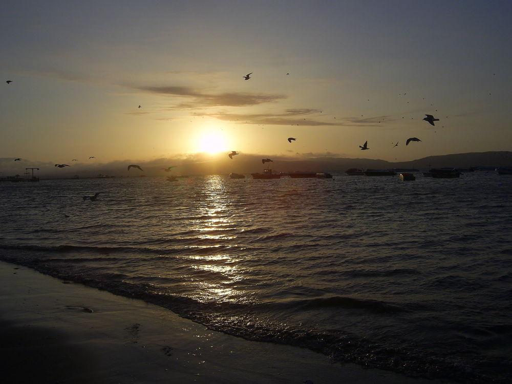 Paracas Marzo2012 155 by cesargty