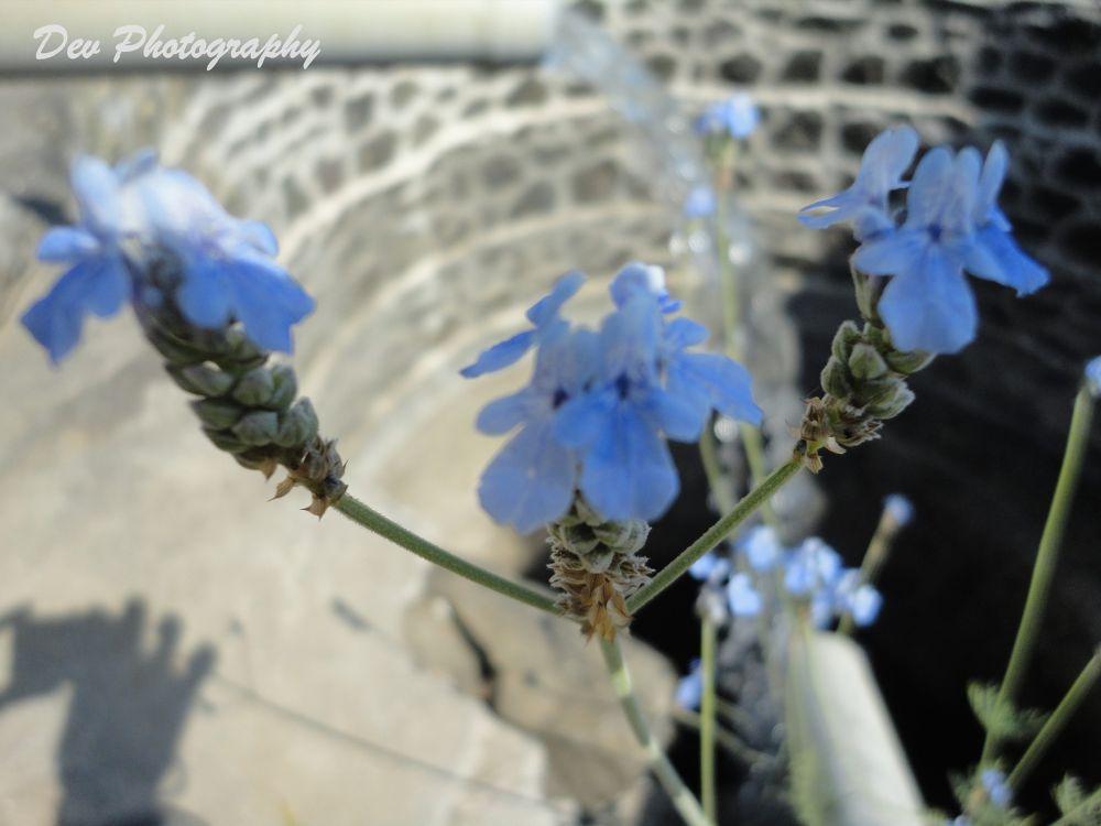 Well & Flower....!!! by DevRane
