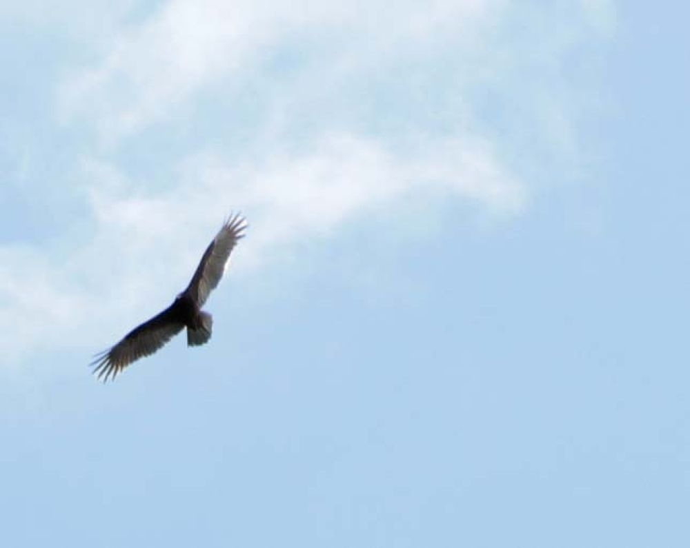 Bird on the wing by Linda L. Offen
