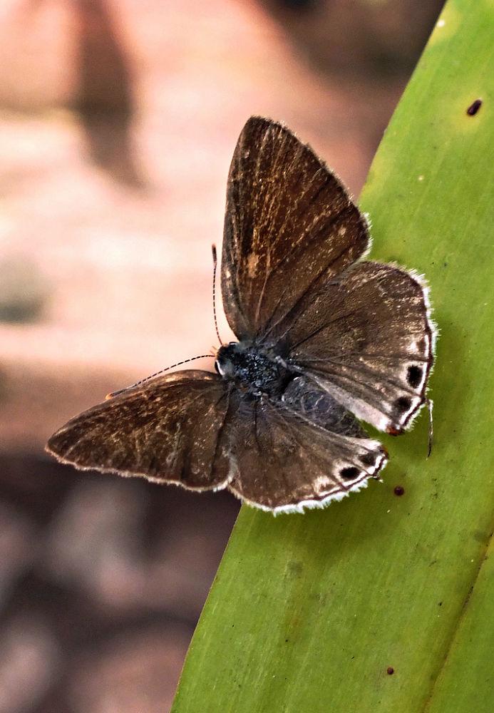 Butterfly, borboleta by Rui Oliveira Santos