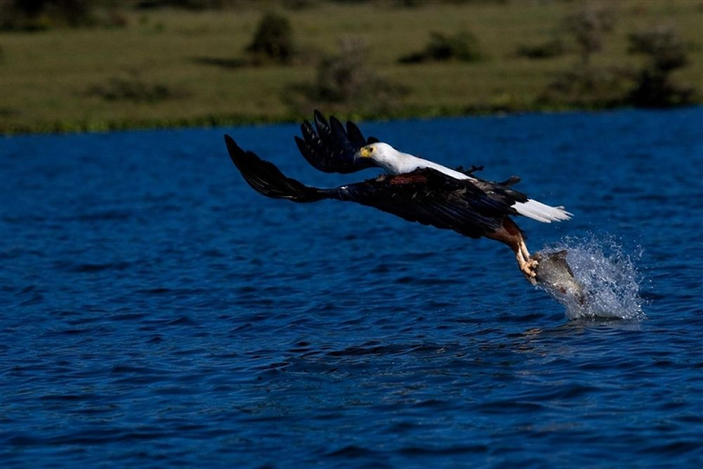 Photo in Random #eagle