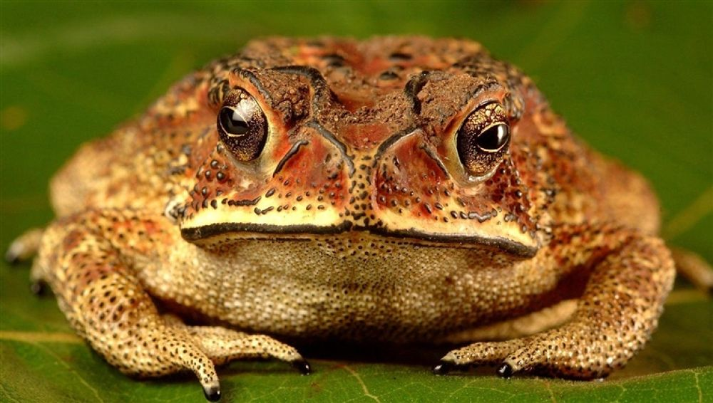 Photo in Random #frog