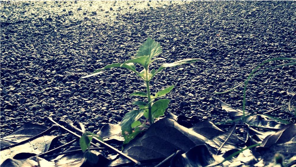 جميع أزهار المستقبل هي في البذور التي تزرعها اليوم. by Photographer