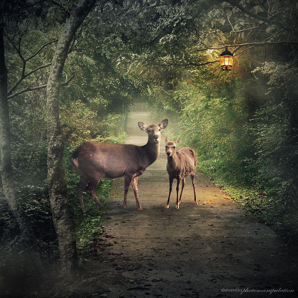 deers on path by EvenLiu