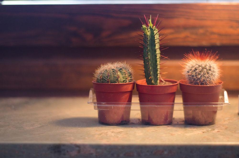 Three stooges by Chris Das