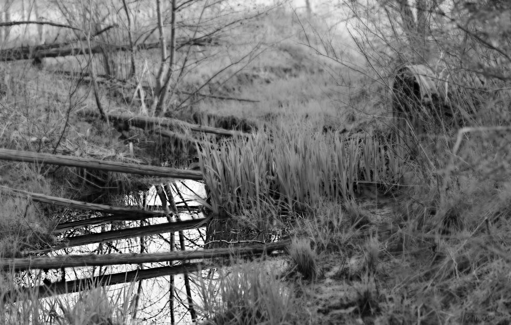Photo in Nature #nature #black and white #reflection #water