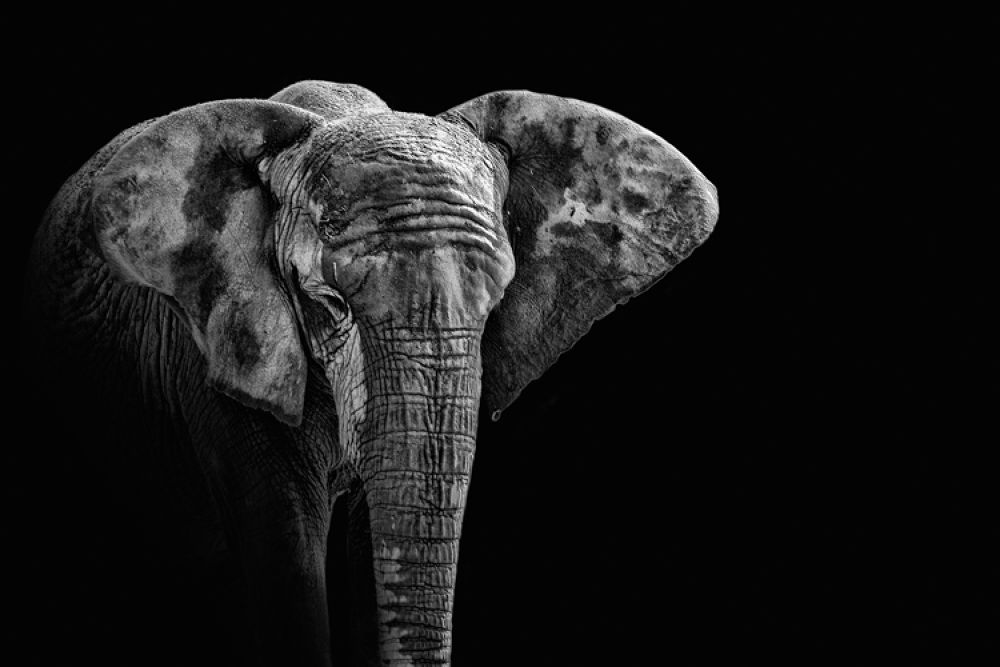 Photo in Animal #elephant #zoo #sauvage #canon 5d