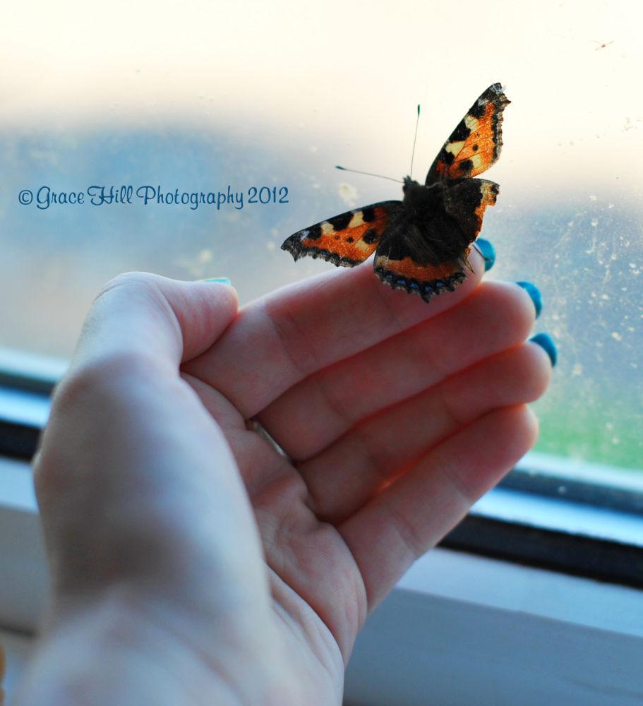 The Friendly Butterfly by Grace_Eliz