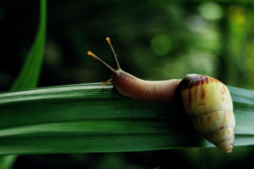 snail on a leaf by Nadi