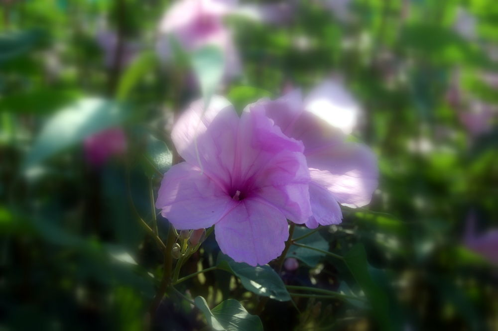 flower in Cuba by MoniqueTabensky Photography