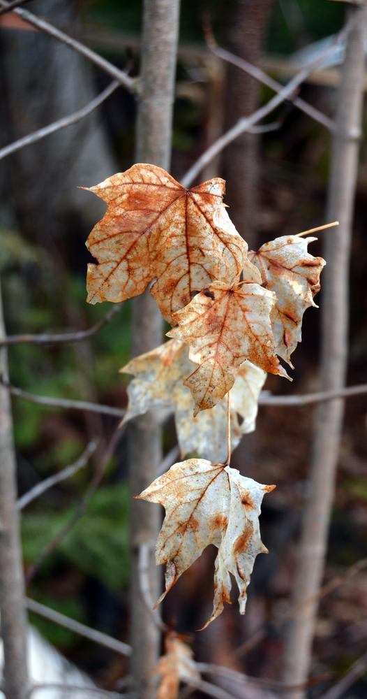 leaves by MoniqueTabensky Photography
