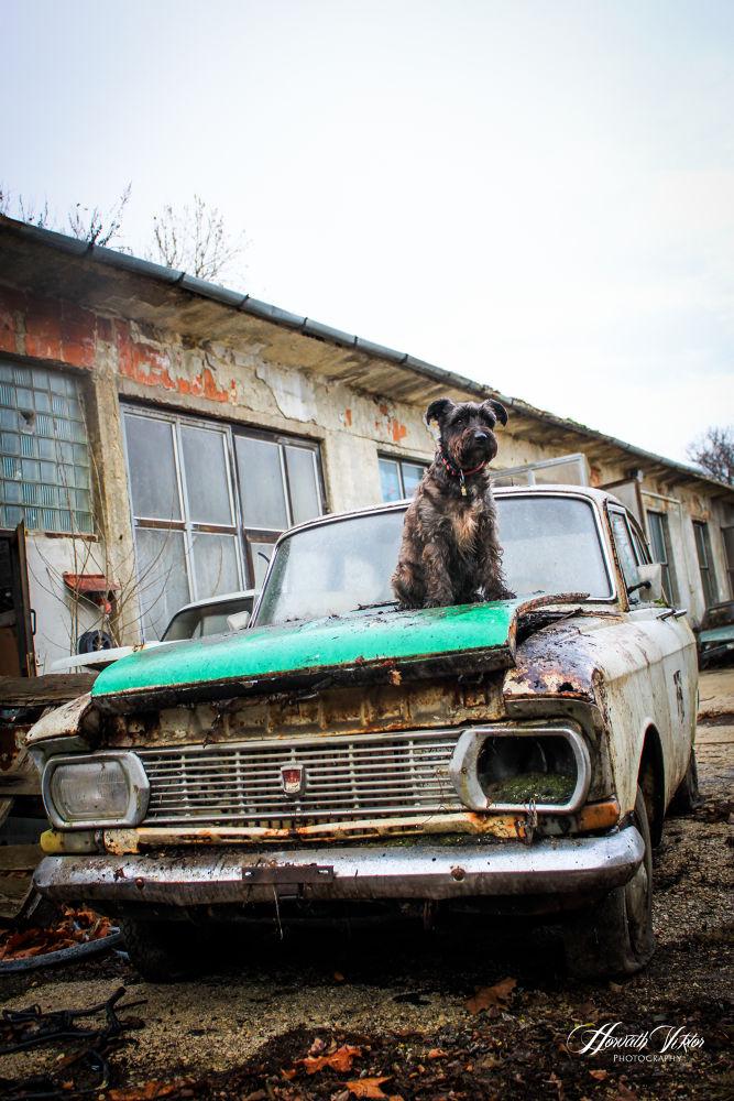 My dog, Bobo by Horváth Viktor
