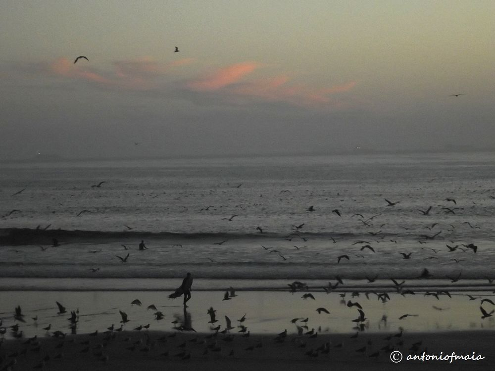 Seagulls fest at the surfers paradise... by Antonio F. Maia