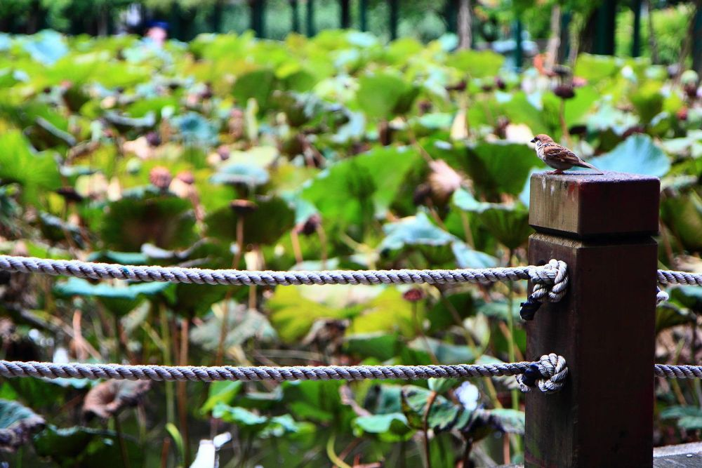 Taiwan taipei Botanical garden by vincentnex7