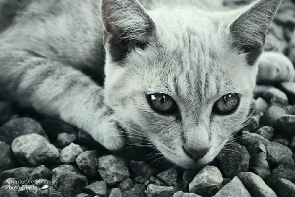 Kitty by Kay Farmer