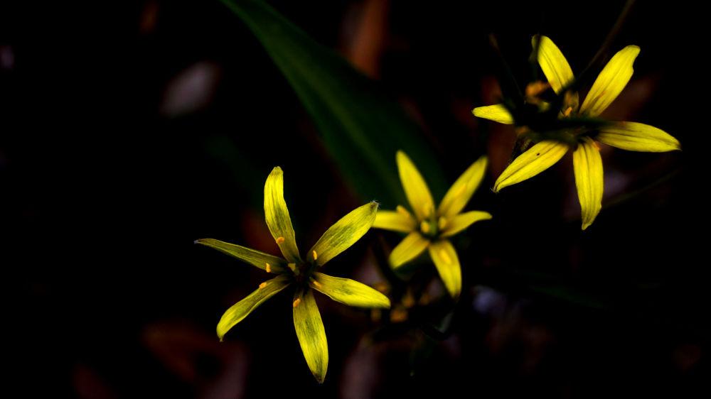 Flowers by Kemal Can Çakar