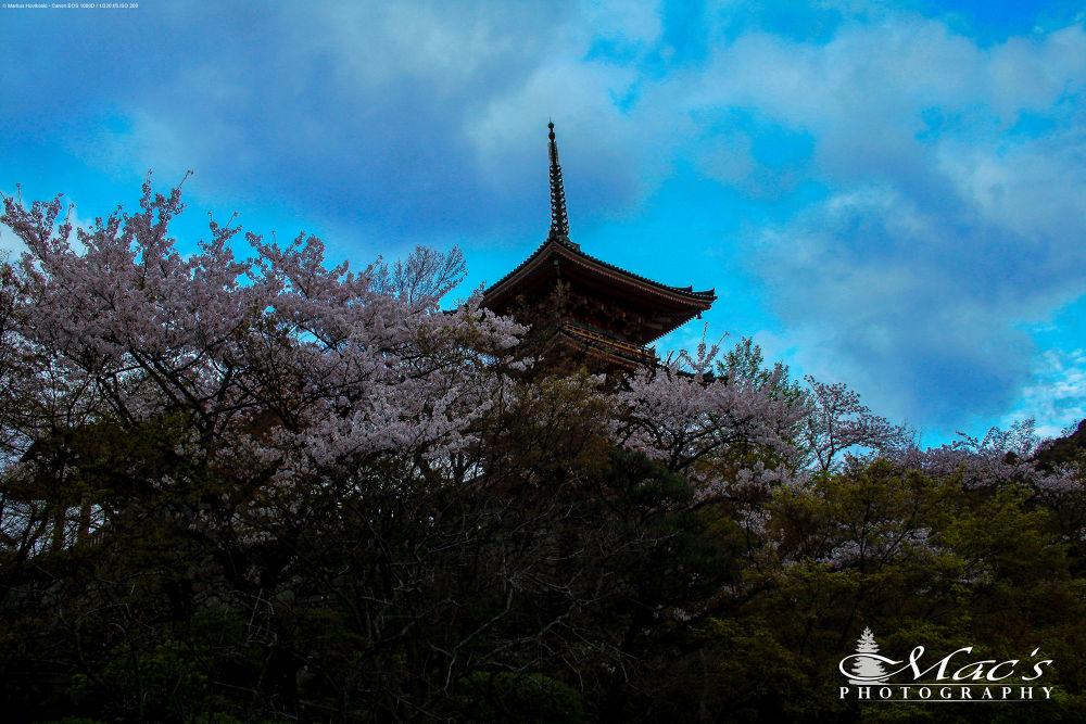 Sakura and pagoda by Mac's Photography