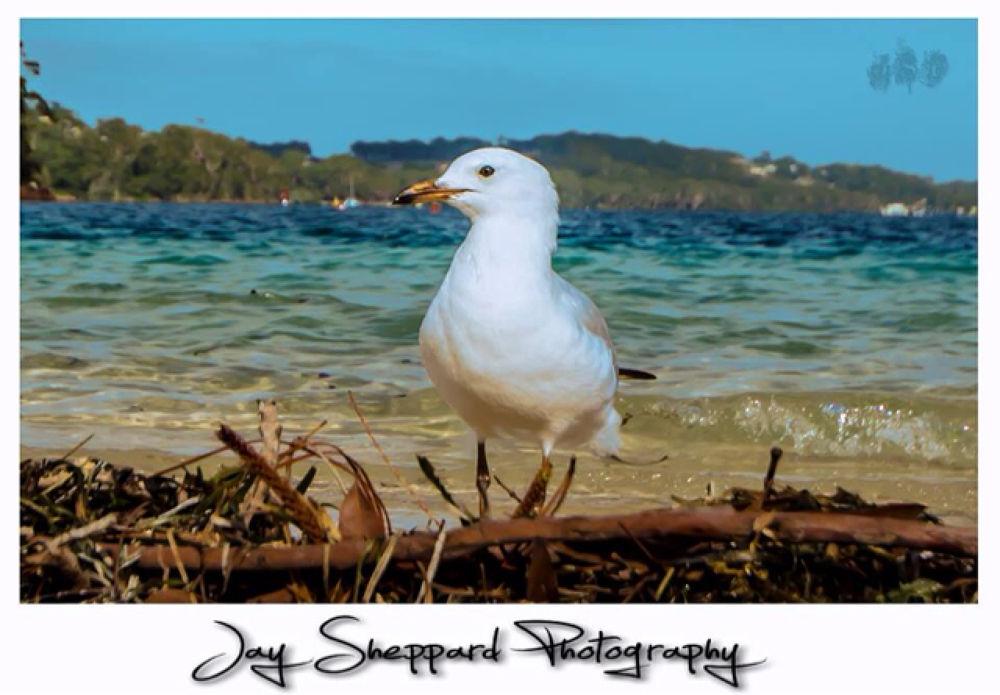 sea breeze by Jay Sheppard