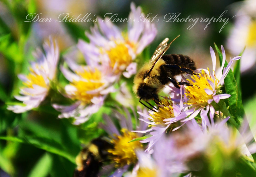 Bee by Dan Riddle's Fine Art Photography