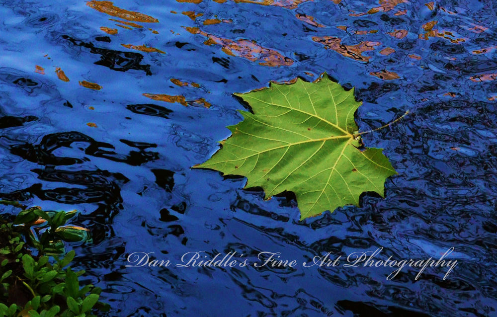 Leaf by Dan Riddle's Fine Art Photography