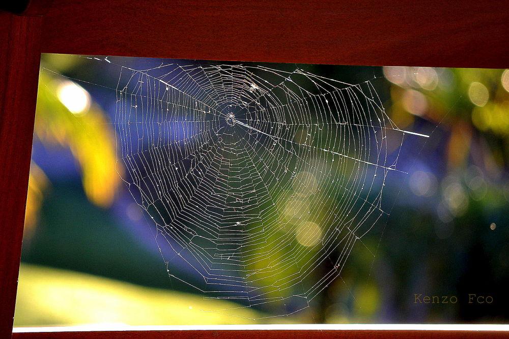Teia de aranha by Kenzo