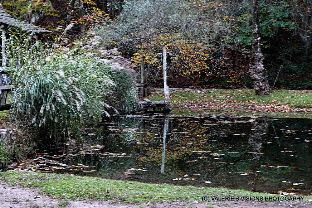 IMG_9676 The pond at Cuttalossa Farm by valsvisions