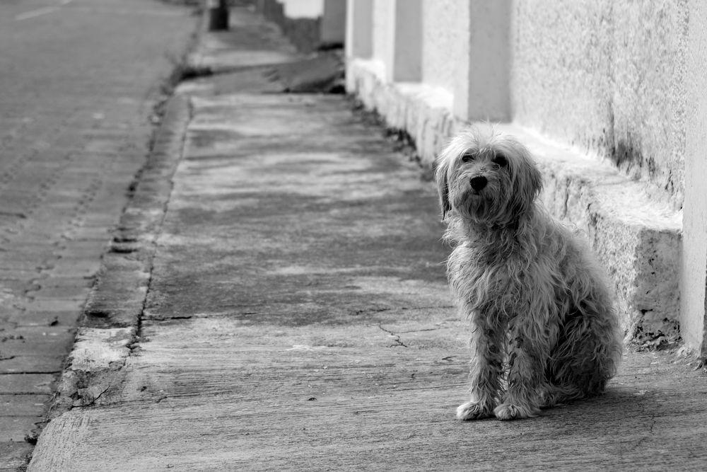 Fotos de Animales by edcorellam