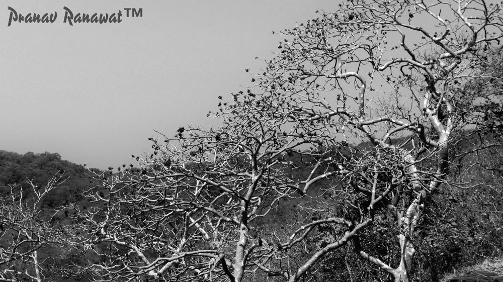 IMG_2082 by pranavranawat