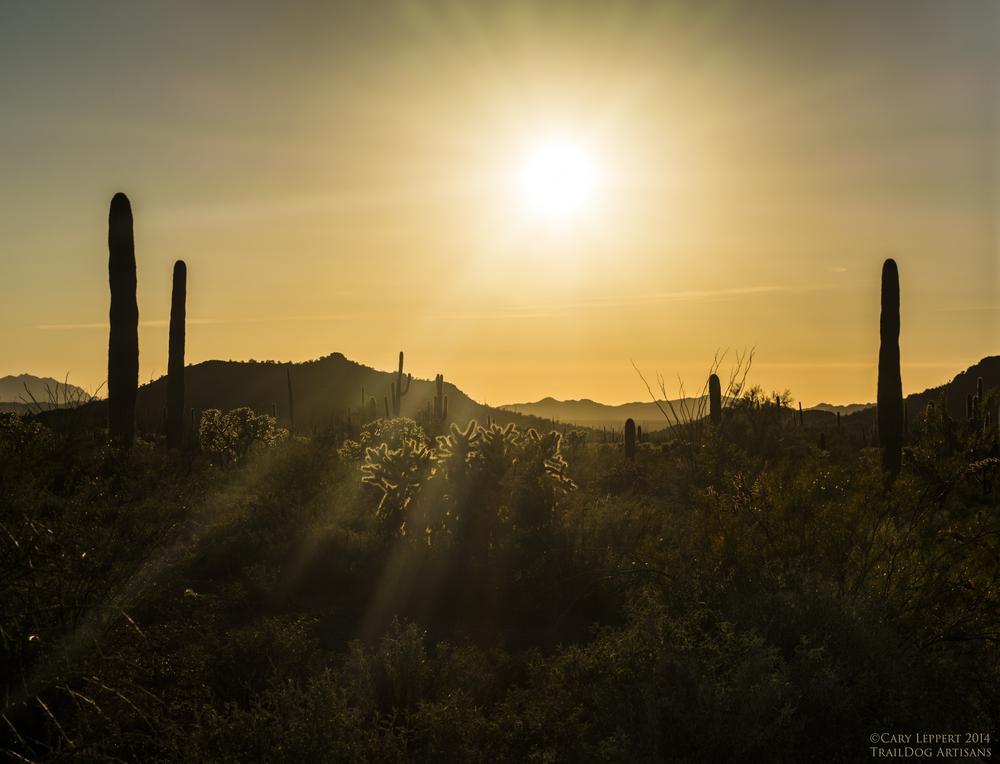 Photo in Landscape #sonoran #desert #arizona #sagauro #cholla #cactus #cacti #sunset #mountains