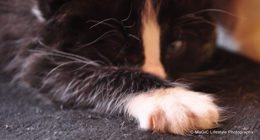 Photo in Animal #animal #cat #pet #kitten #cape town #paw #claw