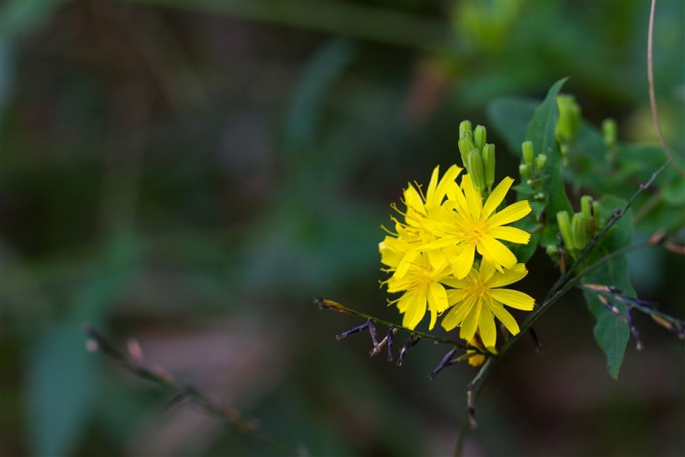 IMG_7121 by betaho