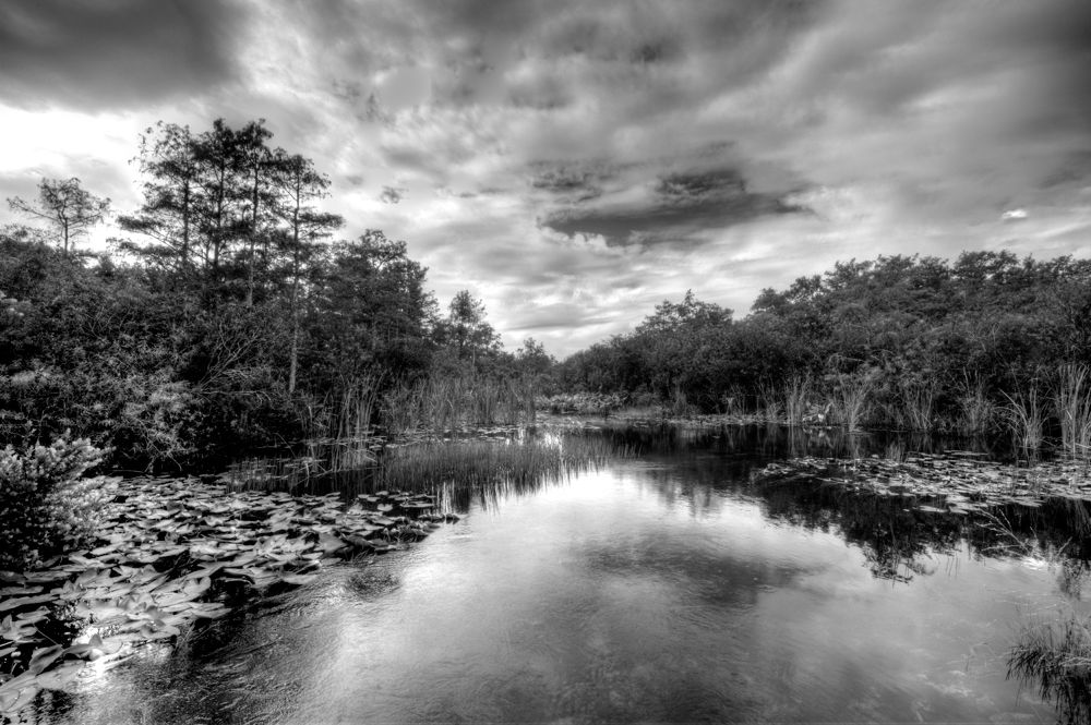 Big-Cypress by Terry L Mase