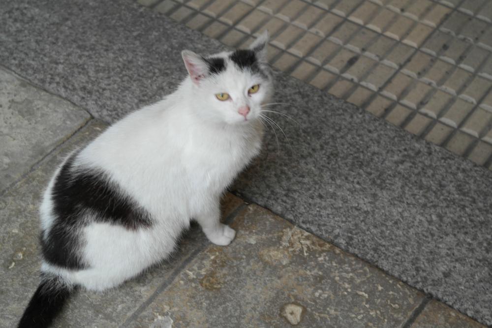 Kot by   Ewa